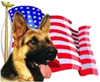 US War Dogs